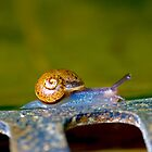 Snail trail! by Martyn Franklin