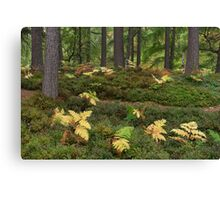 Autumn Forest Ferns - Rothiemurchus Canvas Print