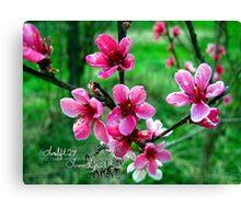 peach blossums Canvas Print