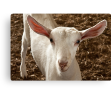 Taking the goat 2 Canvas Print