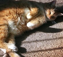 Snoozin' in a Sunbeam by Nadya Johnson
