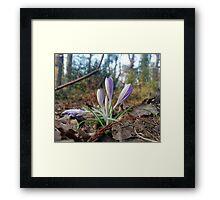 Purple Patch Framed Print