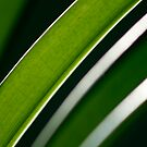 Green Curves by ElRobbo