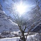 Snow Tree by Stangus