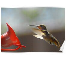 Humming Bird #2 Poster