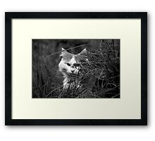 Stalk Framed Print