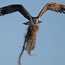 Cushioning the nest!! by jozi1