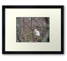 Whiteness in the Thicket Framed Print