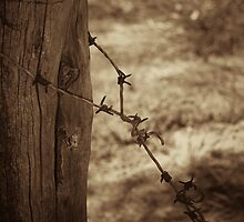 Old barbed wire - sepia by Andreas Koepke