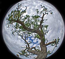 The Tree @ Dogrocks  by AlMiller