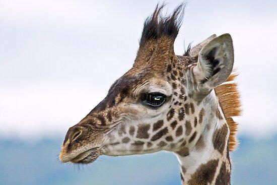 Giraffe Profile 2 by P...