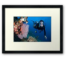 Diver on the reef Framed Print