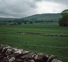 Stone Fences in Dales Cumbria England 198406010004m by Fred Mitchell