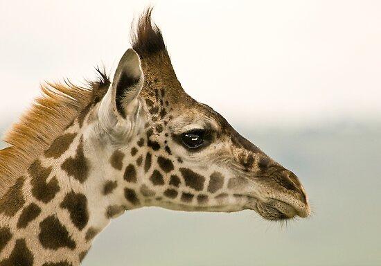 Giraffe Profile by Pet...