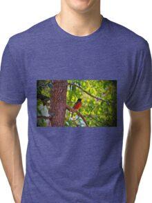 American Robin Tri-blend T-Shirt