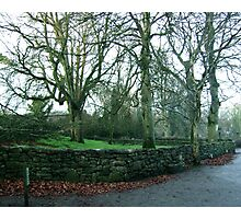 Trees near Bunratty Castle in Ireland Photographic Print
