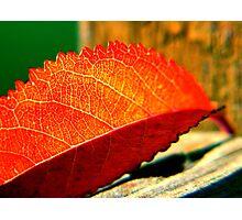 autumn gold ... Photographic Print