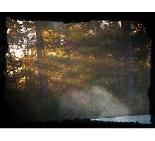 Sunrise through the trees Photographic Print
