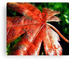 autumn tan ... Canvas Print