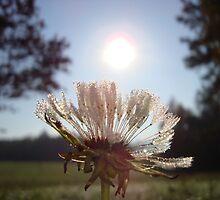 Sun dew frosty fluff ball ah ah yessssss by RealPainter
