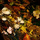 Mushrooms in Autumn by InArcady