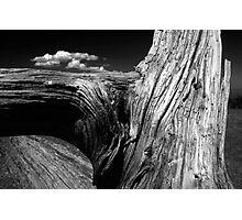 Sage One Photographic Print