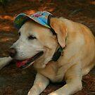 Dog w/ Hat by Charles Adams