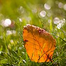 Leaf and Bokeh. by Sherstin Schwartz