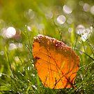 Leaf and Bokeh. by Sherstin Schwartz