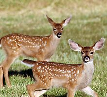 Two deer fawns w/spots  - 1744 by BartElder