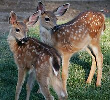 Fawns with spots - 1874 by BartElder