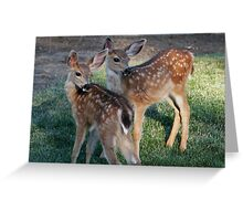 Fawns with spots - 1874 Greeting Card