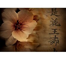 Asian Blossom Photographic Print