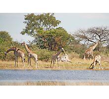 The Giraffe Family, Moremi Game Reserve, Botswana, Africa Photographic Print