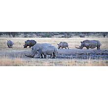 White Rhinos, Khama Rhino Sanctuary, Botswana, Africa Photographic Print