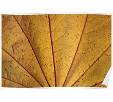 Leaf Rays Poster