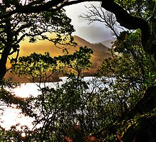 Killarney - Sunset Through The Trees by A90Six
