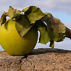 Green Leafy Apple by pixzlee