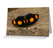 Grecian Shoemaker Butterfly Greeting Card