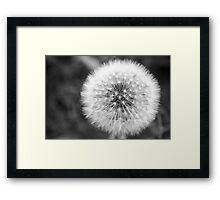 Seed Ball Framed Print