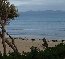 waratah bay 2 by nikki newman