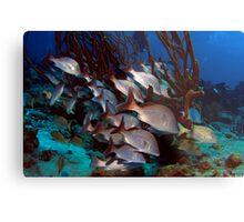 Fish Tails Metal Print