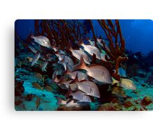 Fish Tails Canvas Print