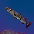 Barracuda by Greg Amptman