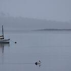 wet day at Triabunna by gaylene