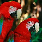 2 Red Macaws by Maureen Clark