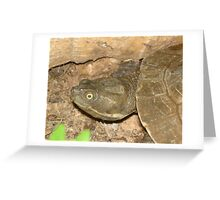 Thomas Turtle Greeting Card