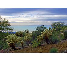 Cholla Cacti in the Desert Photographic Print