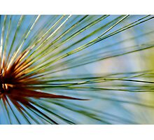 Ray of Grass Photographic Print