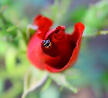 Lady Bug Hide Out by Ann Marie  Barnes